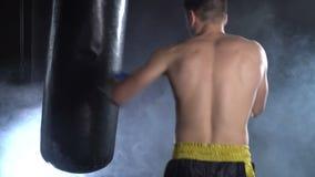 Bokser opleiding in de gymnastiek stock video