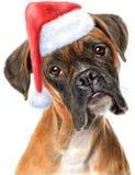 Bokserhond en Kerstmanhoed Stock Fotografie
