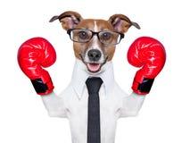 Bokserski pies Obrazy Stock