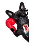 Bokserski pies Zdjęcie Royalty Free