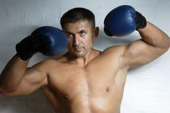 boksery fotografia stock