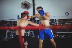 Boksery walczy w bokserskim pierścionku obrazy royalty free