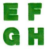 Bokstäver E, F, G, H som göras av isolerat grönt gräs på vit Arkivbilder