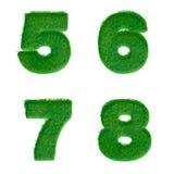 Bokstäver 5,6,7,8 gjorde av isolerat grönt gräs på vit Arkivbild