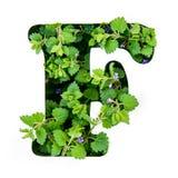 Bokstaven F av det engelska alfabetet från sidorna av gröna växter arkivbild