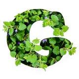 BokstavsGet av det engelska alfabetet från sidorna av gröna växter arkivbild
