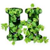 BokstavsHet av det engelska alfabetet från sidorna av gröna växter arkivbilder