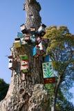 boksuje target114_0_ drzewa Zdjęcie Royalty Free