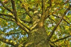 Bokträd i solFagussylvatica Royaltyfria Bilder