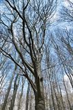 Bokträd under molnig himmel royaltyfri bild