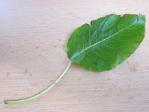 Bokträdblad diagonalt på beige träbakgrund royaltyfria foton