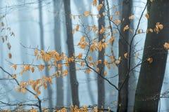 Bokträdblad i vinterskogsmark royaltyfria foton