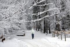 Bokträdsidor med snö och droppar av dagg Royaltyfri Bild