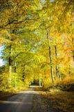 Bokträdskog i höst Arkivfoto