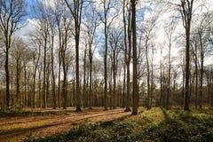 Bokträdskog i tidig vår Royaltyfri Fotografi