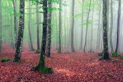 Bokträdskog med dimma och solstrålar Royaltyfria Bilder