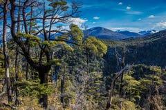 Bokträdskog och berg Royaltyfria Foton
