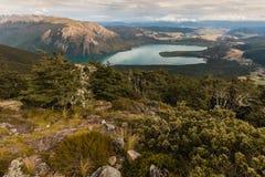 Bokträdskog ovanför sjön Rotoiti i Nelson Lakes National Park Royaltyfri Bild