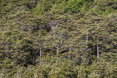 Bokträdskog på backen Arkivfoto