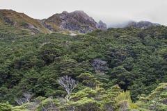 Bokträdskog på backen Royaltyfri Foto