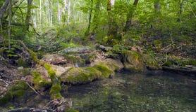 Bokträdskog, skoggräsplan 15 Arkivfoto