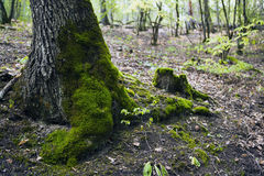 Bokträdskog, skoggräsplan 16 Fotografering för Bildbyråer
