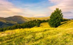 Bokträdskogar av Carpathian berg i afton arkivfoto