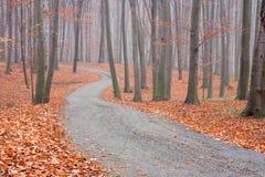 Bokträdskogbana Arkivfoto