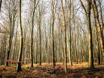 Bokträdskogsmark arkivbild