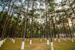 Bokträdet och sörjer från nedersta sikt Arkivbild