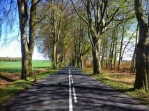 Bokträdgränd nära Naclaw Arkivfoto