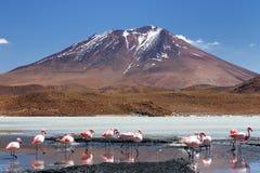Bolívia - parque nacional de Eduardo Avaroa Fotografia de Stock