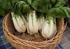 Bol Choy for sale at a farmers market Royalty Free Stock Photo
