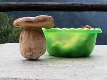 Bol de champignon de couche Image libre de droits