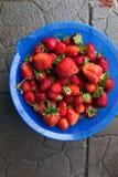 Bol de fraises fraîchement sélectionnées photos libres de droits