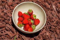 Bol de fraises sur le paillis en bois image stock