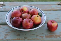 Bol de pommes spartiates Photographie stock libre de droits