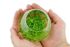 Bol de thé vert Photo libre de droits