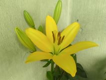 Bol gele bloemen Royalty-vrije Stock Foto's