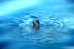 Bol op het water Stock Foto's