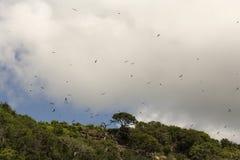 Bolaños海岛哥斯达黎加 免版税库存图片