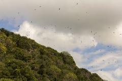 Bolaños海岛哥斯达黎加 免版税库存照片