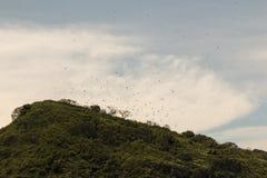 Bolaños海岛哥斯达黎加 库存图片