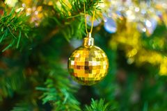 Bola amarela que pendura no ramo da árvore de Natal no backg Imagens de Stock Royalty Free