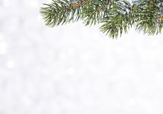 Bola brilhante bonita em um fundo do inverno Fotos de Stock