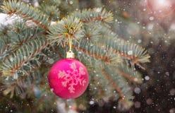 A bola brilhante bonita pesa come Imagens de Stock