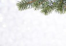 Bola brillante hermosa en un fondo del invierno Fotos de archivo