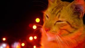 Bola de Chirstmas e metragem de cintilação da lâmpada com jogo do gato Natal filme