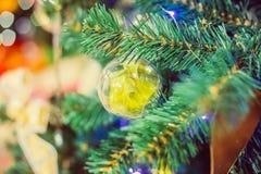 Bola de cristal de la Navidad en el árbol Foto de archivo