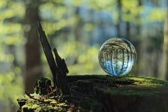 Bola de cristal en bosque Imagen de archivo